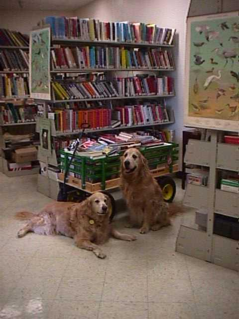 Two dogs resting in the Pocopson Home library