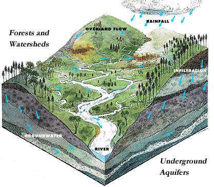 A diagram of forests and watersheds